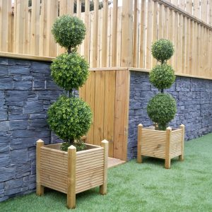 Ball topiary trees