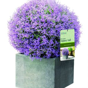 Purple flower topiary ball
