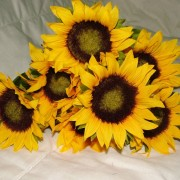 Silk sunflowers