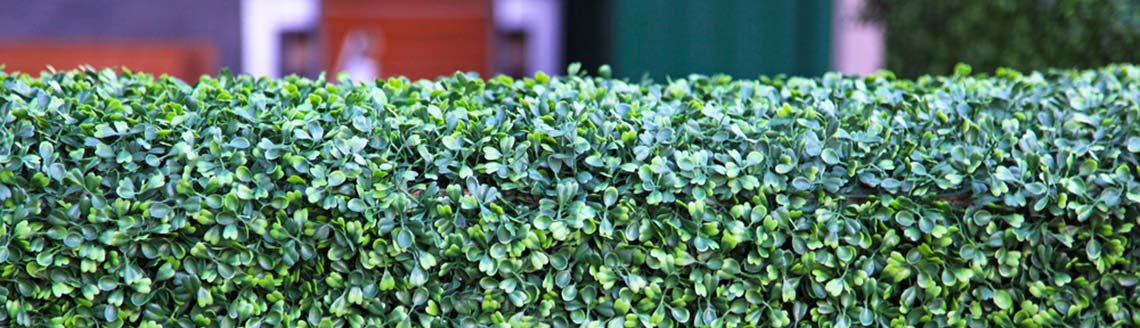 7 reasons to choose an artificial hedge